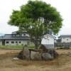 新そば丸の庭
